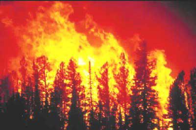 money-bureau-of-land-management-wildfire-blm4