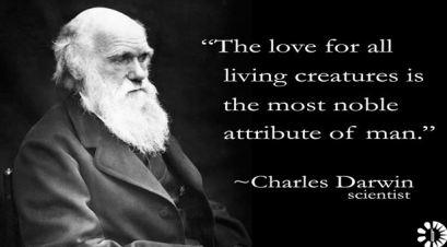 KITTEN Charles Darwin the love of all living