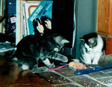 KITTEN CROP tibby and coosh babies